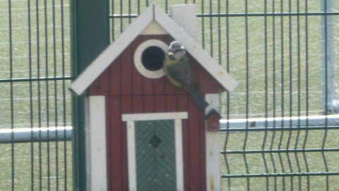 Nest Boxes for our Birds