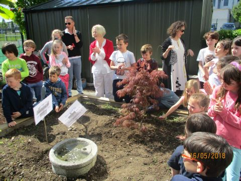 Commemorative Tree in Our School Garden